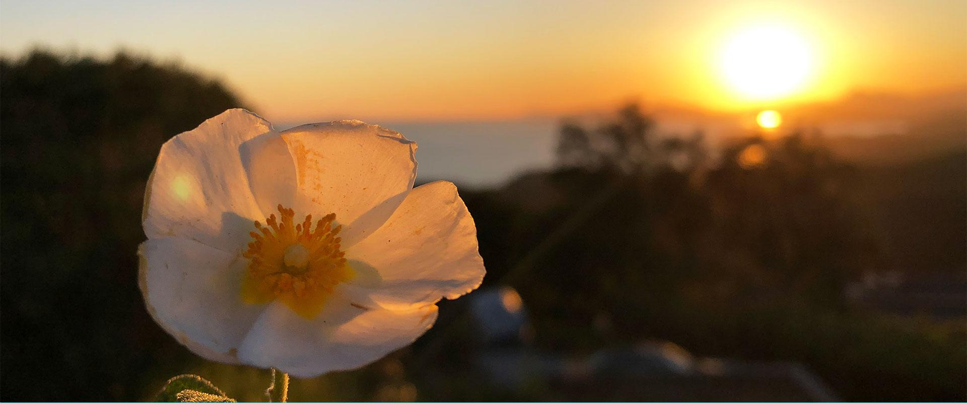 Podcast Prends soin de toi 12 - La poesie du printemps